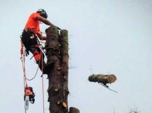 Kev Reid Tree Works