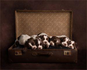 Puppy Litter Photo Shoot