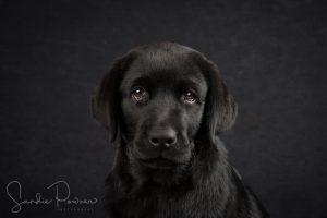 Puppy portrait photography