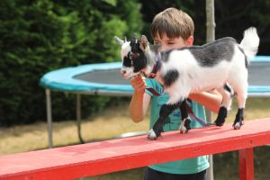 goat agility 300x200