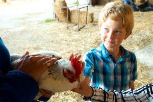 farm images hens 300x200